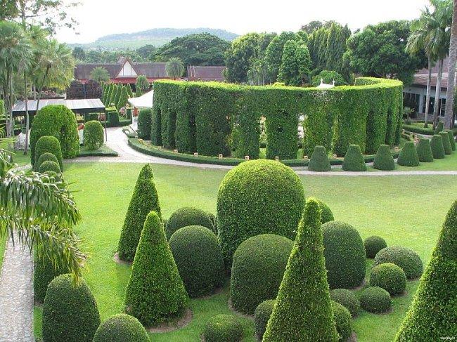 И озеленение › топиарное искусство